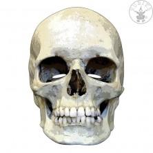 Smrtka - kartonová maska pro dospělé