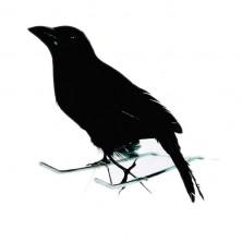 Vrána černá 15cm